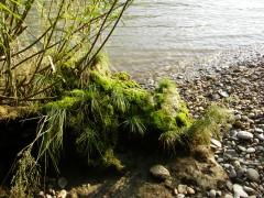 An der Donau Stilleben3