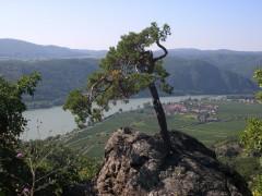 Donaublick auf Unterloiben
