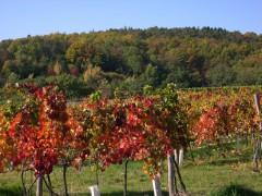 Herbst über Krems3