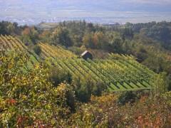 Herbst über Krems2