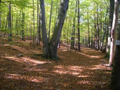Wälder um Waldhof