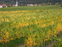 Unterloiben in den Weingärten im Herbst