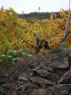 Weinterrassen im Herbst